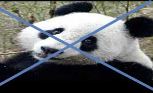 beat Google Panda update